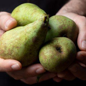 Producteur de poires locales et fruits locaux